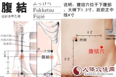 肚子经络图解-腹结穴(位置图和按摩手法)